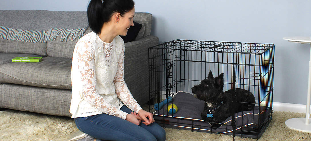 The Fido Classic is a great way to help train a puppy.