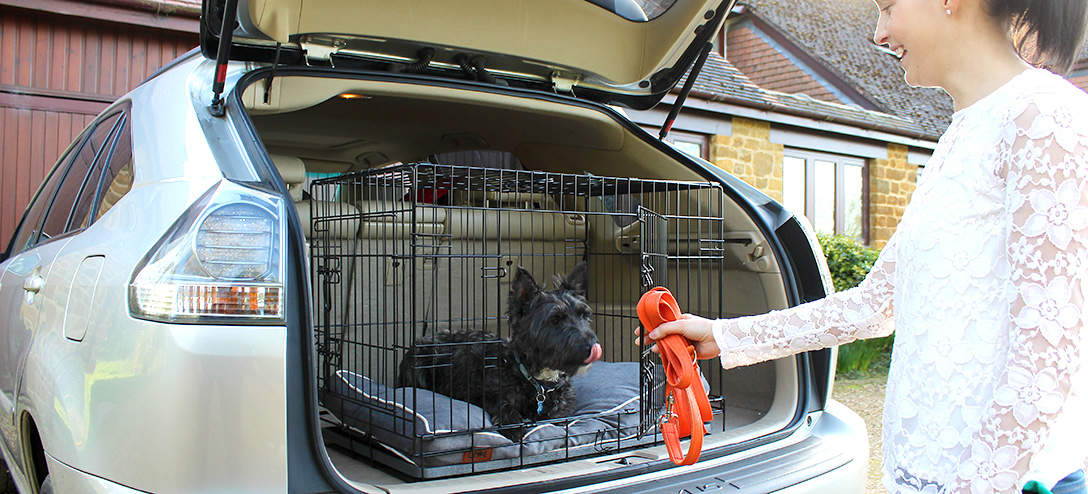 Your dogs like to be in familiar surroundings in the car.