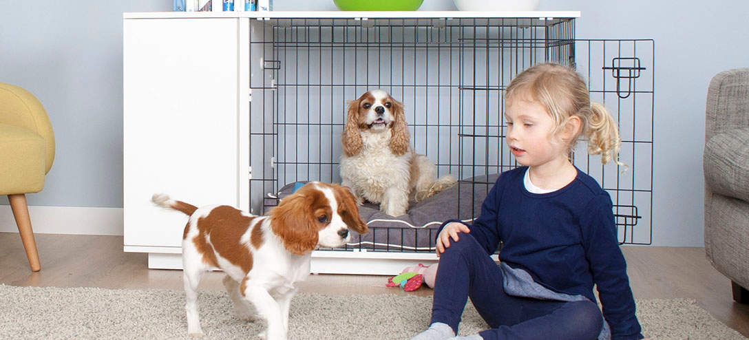 Bring your dogs into the family home