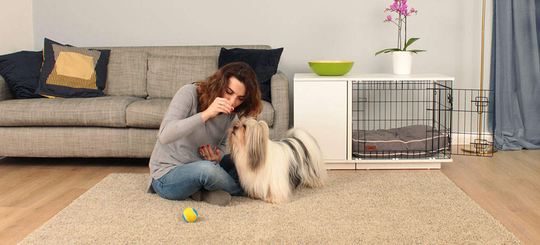 You and your dog will be proud of your Fido Studio