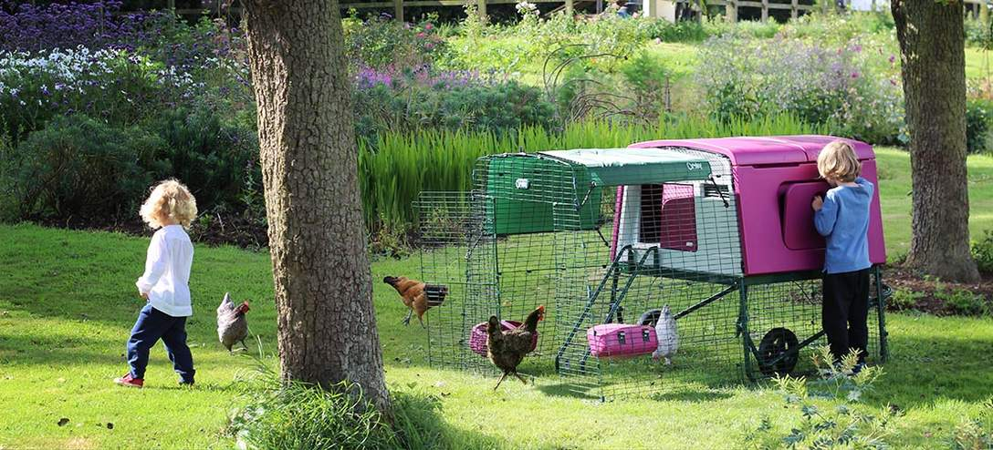 New Eglu Cube Chicken Coop Chicken Keeping Omlet - Chicken co op with flowers
