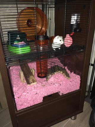 Un hamster heureux