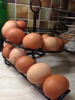 Our egg Skelter