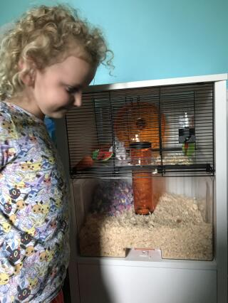 My daughter loves her new hamster Oreo's home