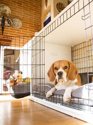 MG the beagle