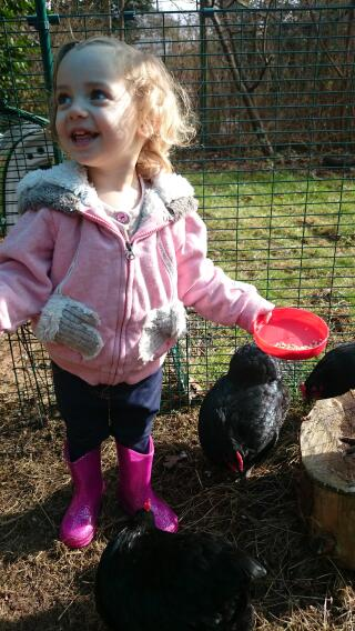 Loving the chickens.
