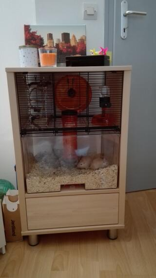 Cage Qute de mes gerbilles