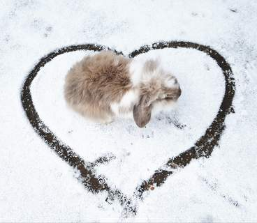 i love the snow from Zena and bronte