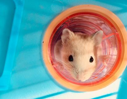 Frank the Hamster