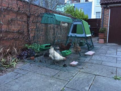 Urban garden eglu go with 1m extension...