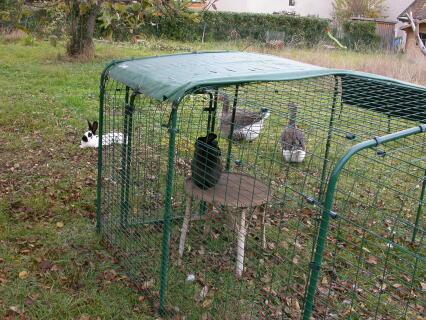 Notre enclos pour lapins Omlet