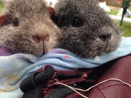 Two healthy piggies!