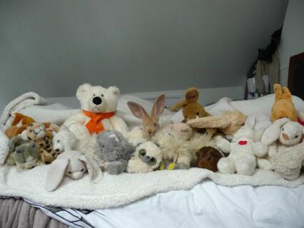 spot the bunny