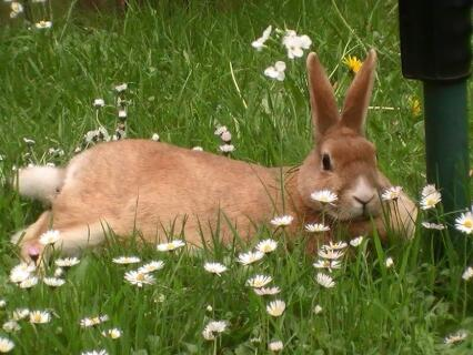 Toffee relaxing in the grass and flowers