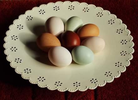 Eggsplate
