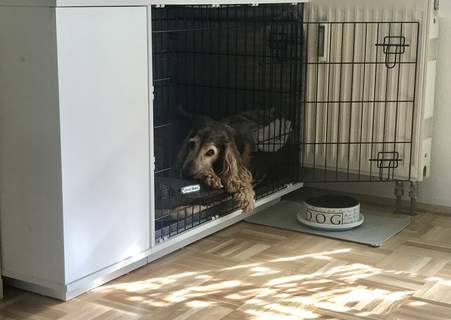 Alf, Cockerspaniel in Hundebox 36, weiß