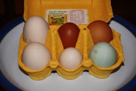 6 beautiful eggs
