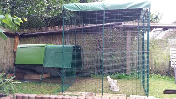 Wetterschutz f Lachshühner