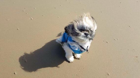 César a la plage
