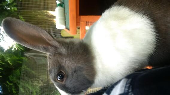 barney the rabbit!