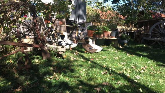 Cicilinos im Herbst