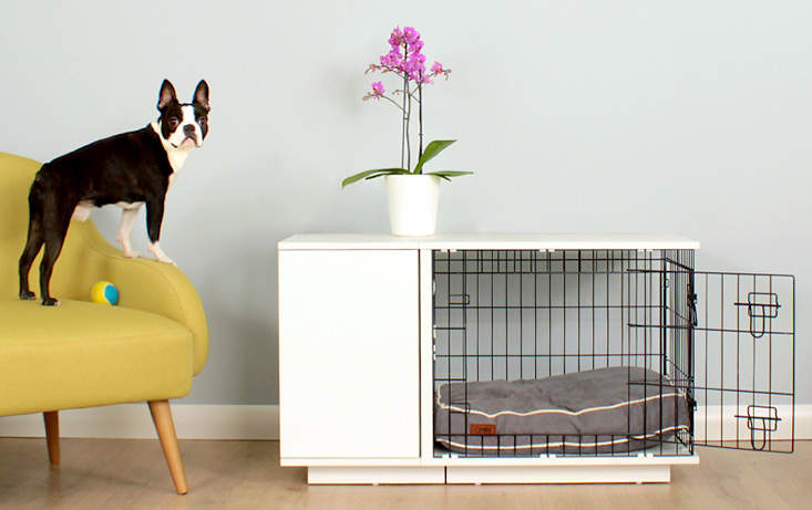 Your dog will be proud of their Fido Studio
