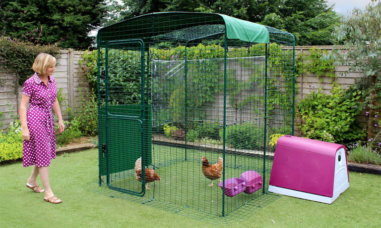 The Walk in Chicken Run can be attached to your Eglu for the ultimate chicken keeping space