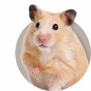 Hamster Guide