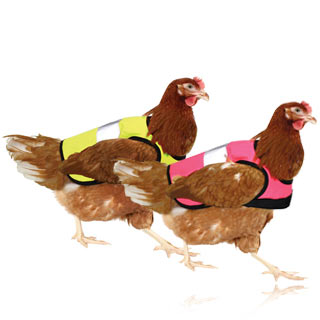 Chicken Clothing