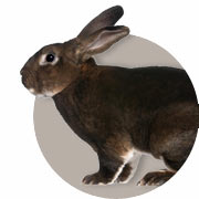 Rabbit Guide